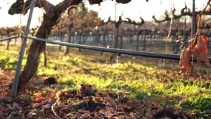 irrigation-vineyard_1