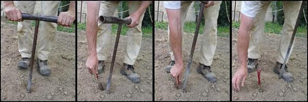 comment planter une vigne?