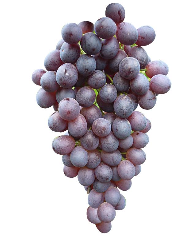 Uvas de mesa Ruby sin pepita, Descripción, características y cultivo.