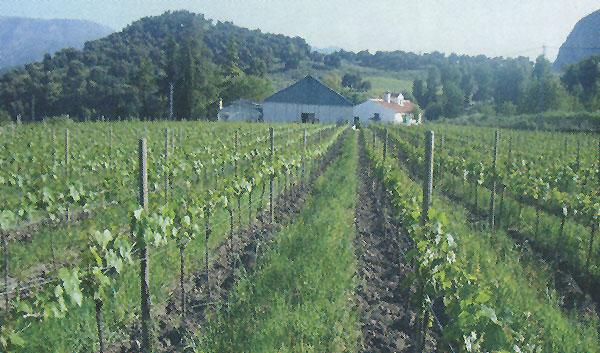 Viticultura ecológica. Una alternativa a la viticultura convencional.