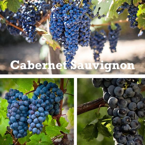 Cabernet Sauvignon. La más extendida por el mundo.
