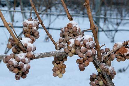Vino de Hielo. Qué es y cómo se hace el Ice Wine?