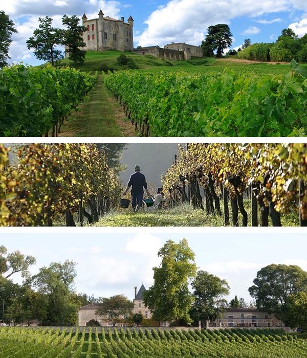 Vinos y viñas de Burdeos: Zonas, variedades, tipos de vino y clasificación.