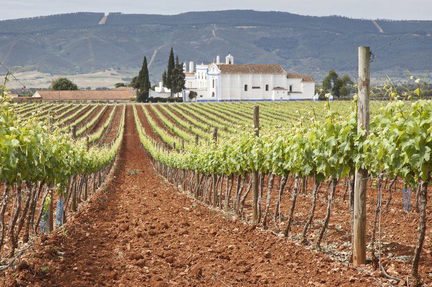 ABRIL: Trabajos en la Viña: control de plagas y enfermedades.