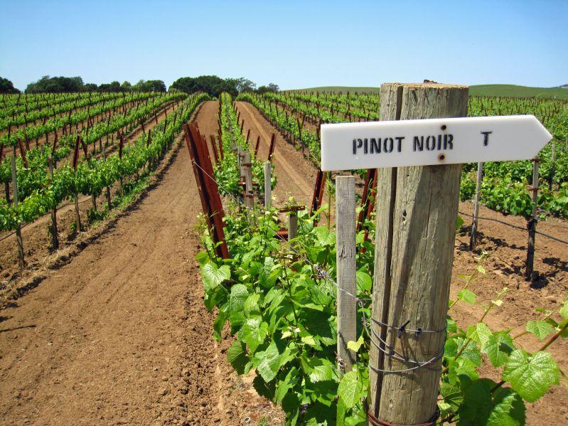 MAYO: Trabajos Viticultura. Poda en verde.