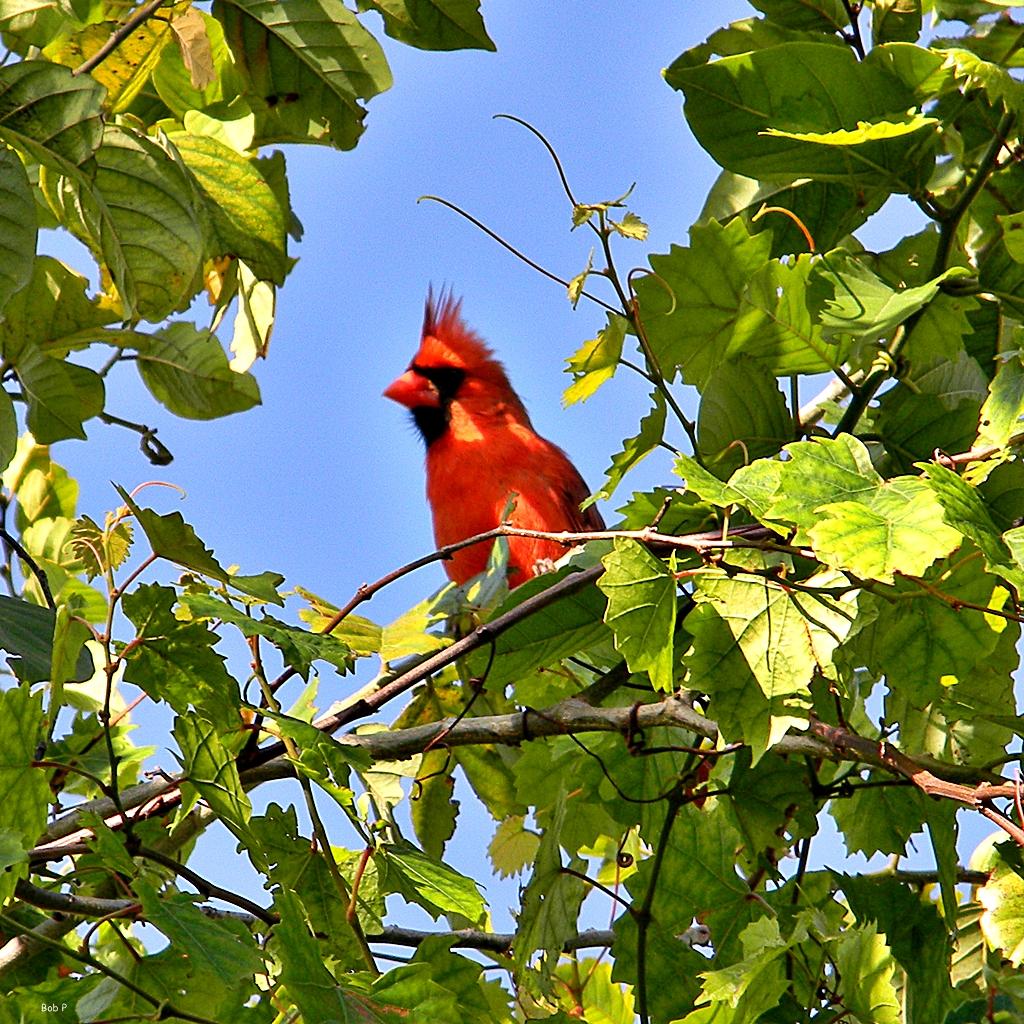 Pájaros y uva. Medidas preventivas disuasorias.