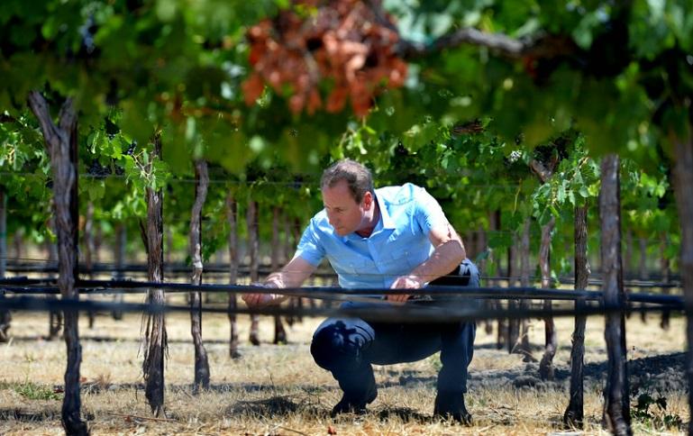 Necesidades hídricas de la vid: ¿Cuándo y cuánto regar la viña?