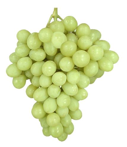 Uva sin semillas Superior: Descripción, Características y cultivo.